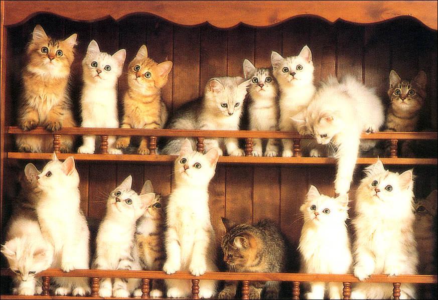 Walkerart Org Cat Videos